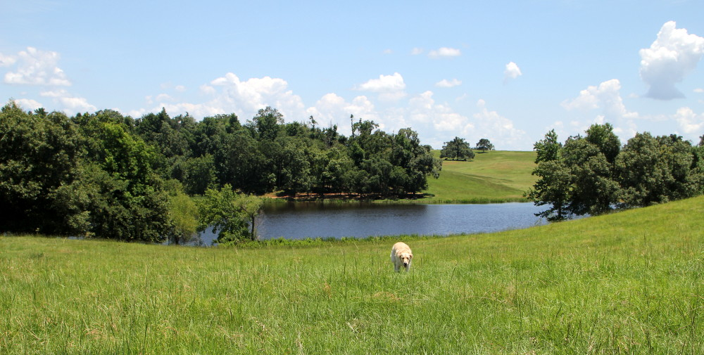 Oklahoma Architect, Ranch Design, Ranch Architect