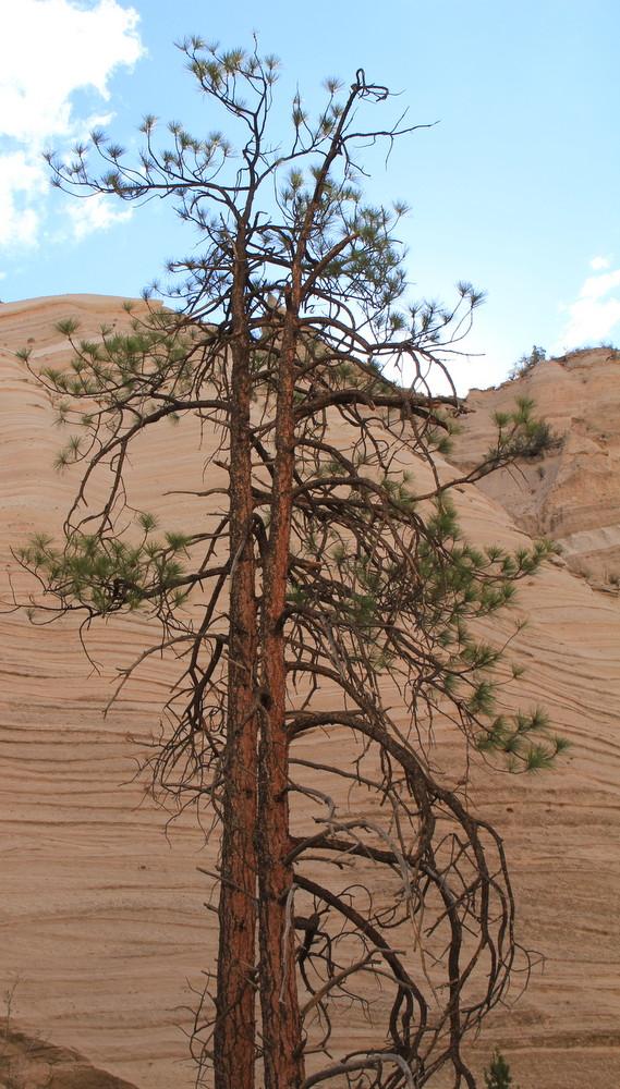 Trees Vacation Destination New Mexico State National Park Parks Canyons Texas Oklahoma Architect