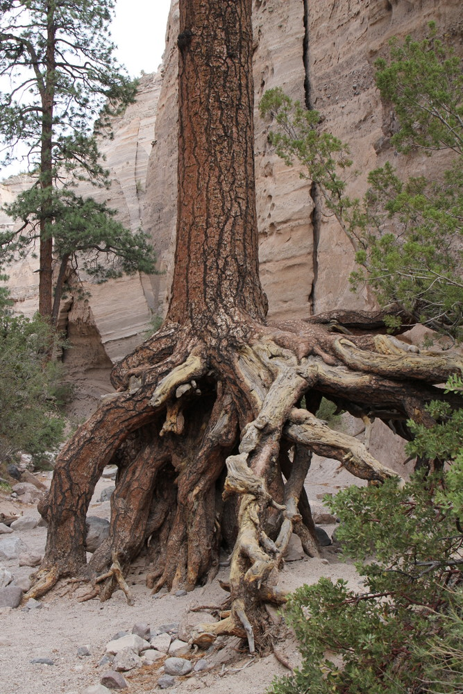 Trees Vacation Destination New Mexico State National Park Parks Canyons Texas and Oklahoma Architect