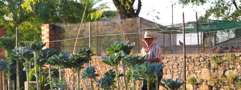 Catalan farmer
